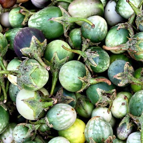 """Những món ngon có mùi """"núi rừng"""" của Đắk Lắk"""