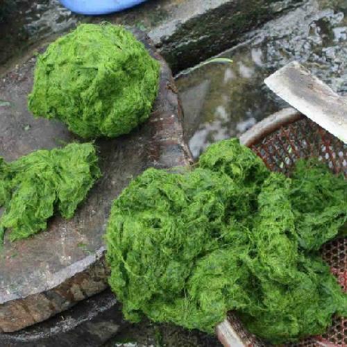 Người Thái ăn đặc sản sống trên đá1