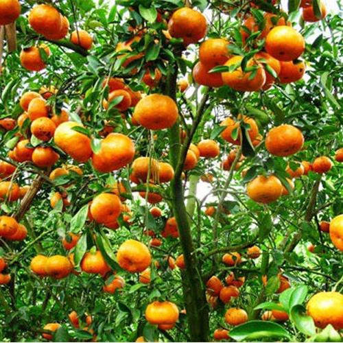Những cung bậc riêng trong ẩm thực Hà Nam4