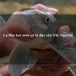 Lạ lẫm hai món cá là đặc sản Tây Nguyên