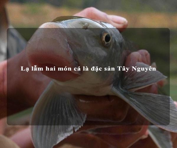 Lạ lẫm hai món cá là đặc sản Tây Nguyên 4
