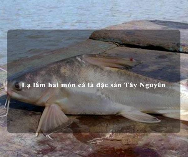 Lạ lẫm hai món cá là đặc sản Tây Nguyên 1
