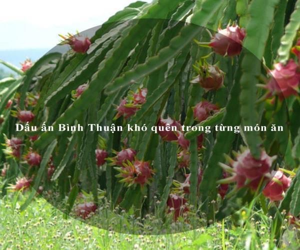 Dấu ấn Bình Thuận khó quên trong từng món ăn 5