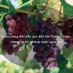 Giữa vùng đất đầy gió đầy cát Ninh Thuận, chúng ta có những món ngon gì?