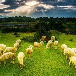 Món ngon từ thịt cừu đặc sản Ninh Thuận